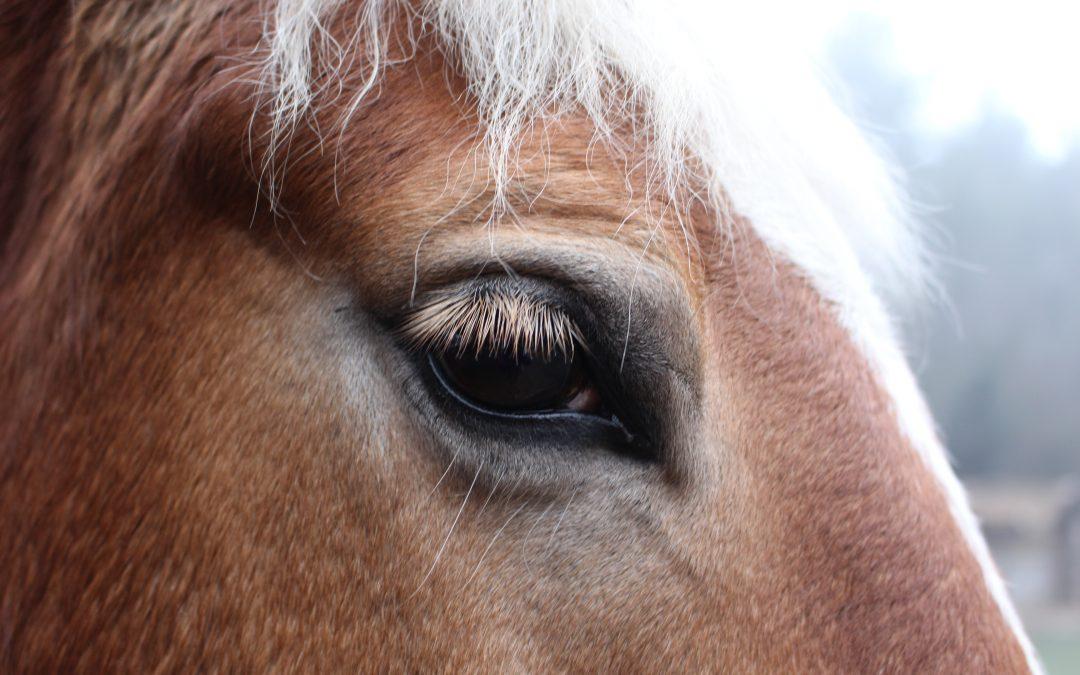 Беседа – Конят и българинът